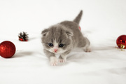 a home trained kittens  for sale