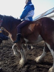 has the disposition to be a great family horse or a good lesson horse