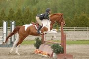 Hunter/Jumper/Event horse for sale