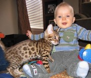 Present.Male And Female Bengal kittens ForADOPTION TEXTNOW (435) 393-