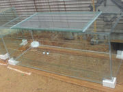 New 120 Gallon Terrarium with Sliding Doors