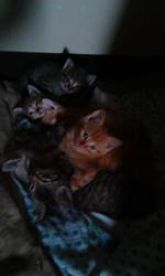 Beautiful kittens to good hoo.e