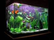 WE GOT SOME GOOD FISH TANKS ANY INTEREST  CONTACT US ASAP